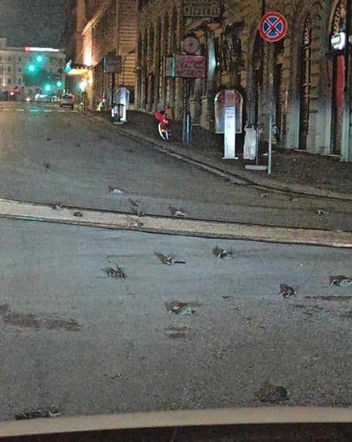 全球各地施放跨年烟火迎接2021年 意大利首都罗马数百只鸟类受到惊吓失去方向惨死