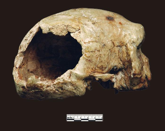 大荔人颅骨:人类演化过程中形态镶嵌的例证