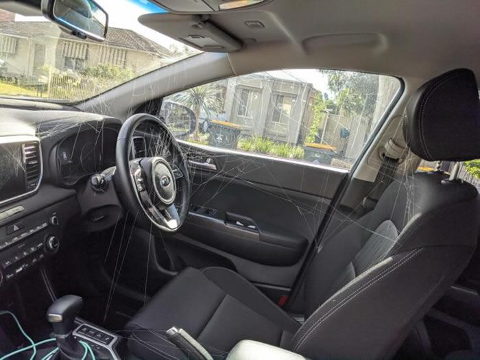 报复?澳洲女子车上杀死巨大蜘蛛 没想到几天后车内竟然出现超多小蜘蛛