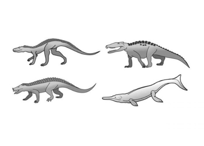 鳄鱼缓慢的进化速度成生存优势 逃过物种大灭绝