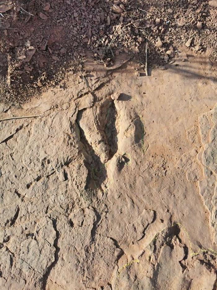 大型恐爪龙类足迹