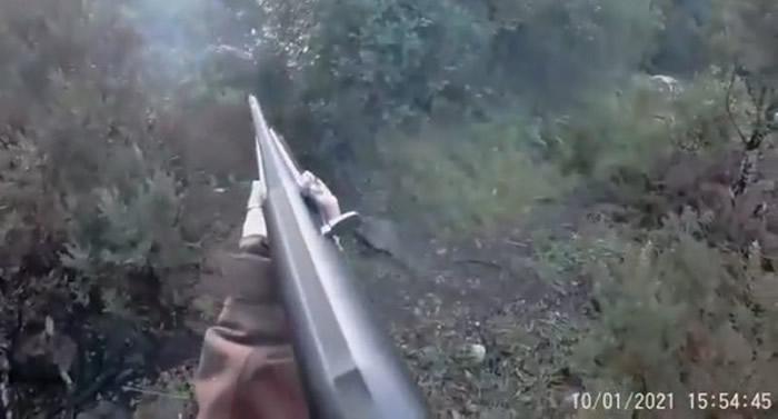 意大利萨丁尼亚岛女猎人遭凶猛野猪反击 没办法装子弹绝望挥枪杆