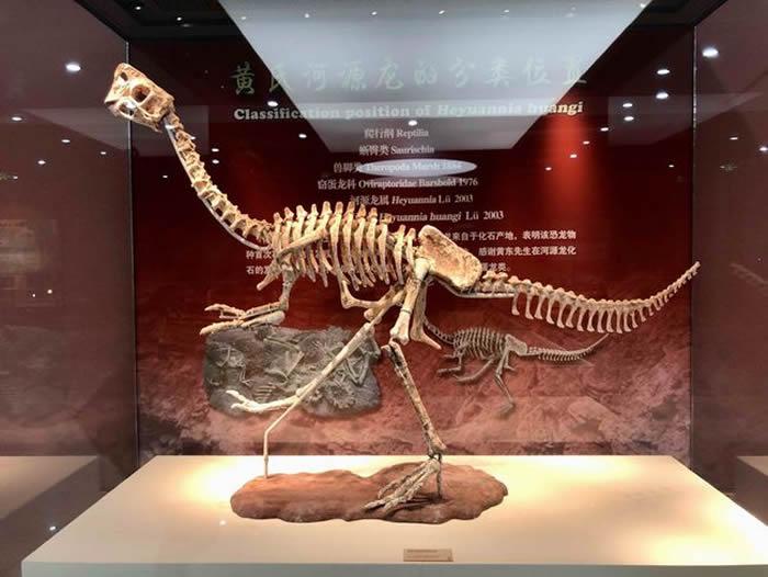 """河源恐龙博物馆镇馆之宝""""黄氏河源龙""""模型全面完工并对外展出"""