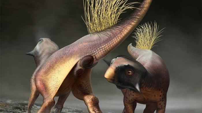 来自中国的新化石揭示这种特殊的恐龙物种可能是如何交配的