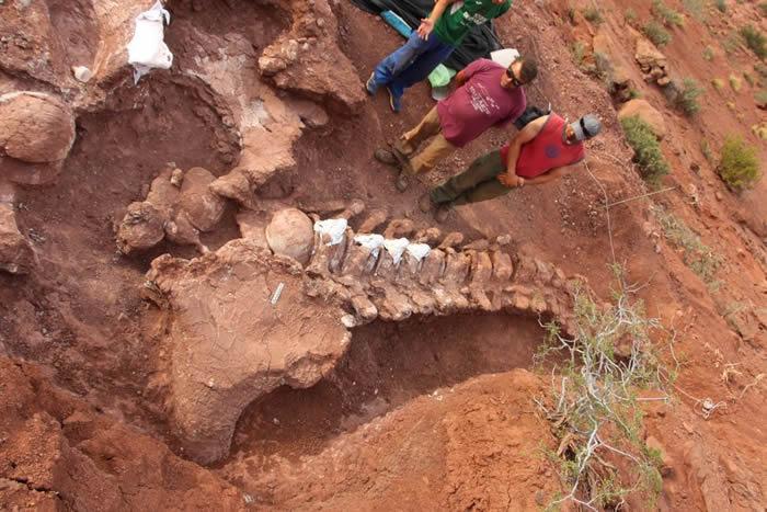 """阿根廷发现9800万年前的恐龙化石 或是""""有史"""