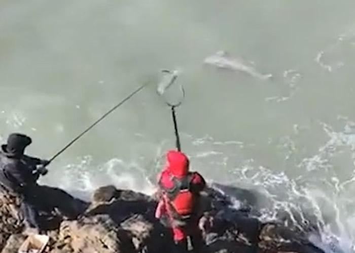 福建福州男子拍片炫耀捕获大鱼 疑是国家一级保护动物江豚