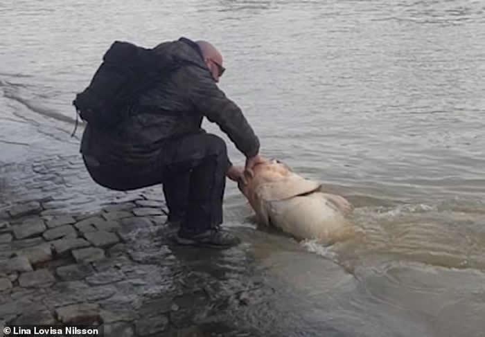 法国巴黎卢浮宫附近捕获1.9米长巨型鲶鱼