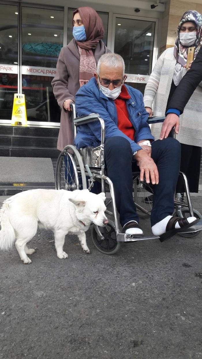 土耳其特拉布宗忠犬追赶接载主人的救护车 接连6天到医院门口守候