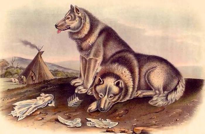 狗的驯化可能开始于古人类无法消化原始的饮食