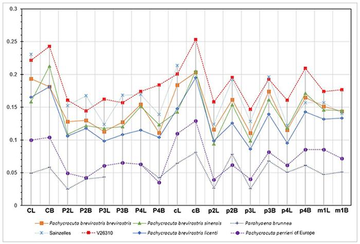 鬣狗牙齿大小对比的辛普森指数图(刘金毅 供图)