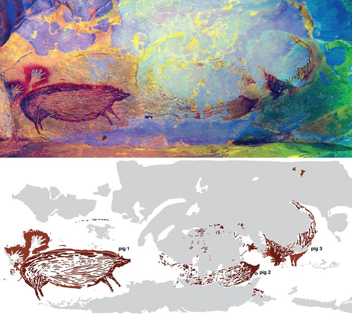这幅洞穴壁画可能描绘着数只疣猪互动的场景。但是侵蚀作用已经带走了两头或可能三头猪的大部分身体,使得科学家难以辨识原图描绘的切确画面。 AA OKTAVIANA