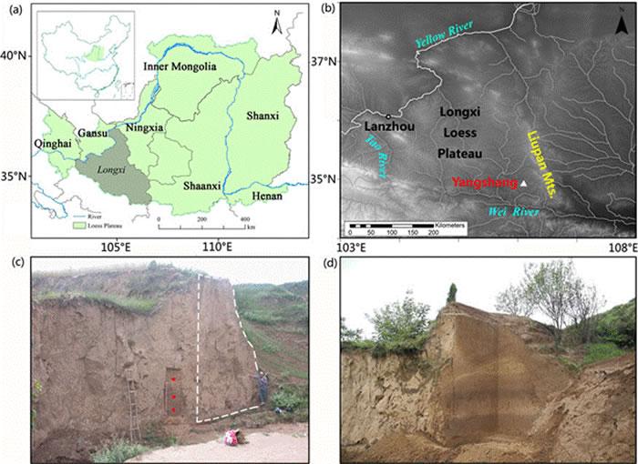 陇西黄土高原和杨上遗址地理位置以及遗址发掘区域示意图