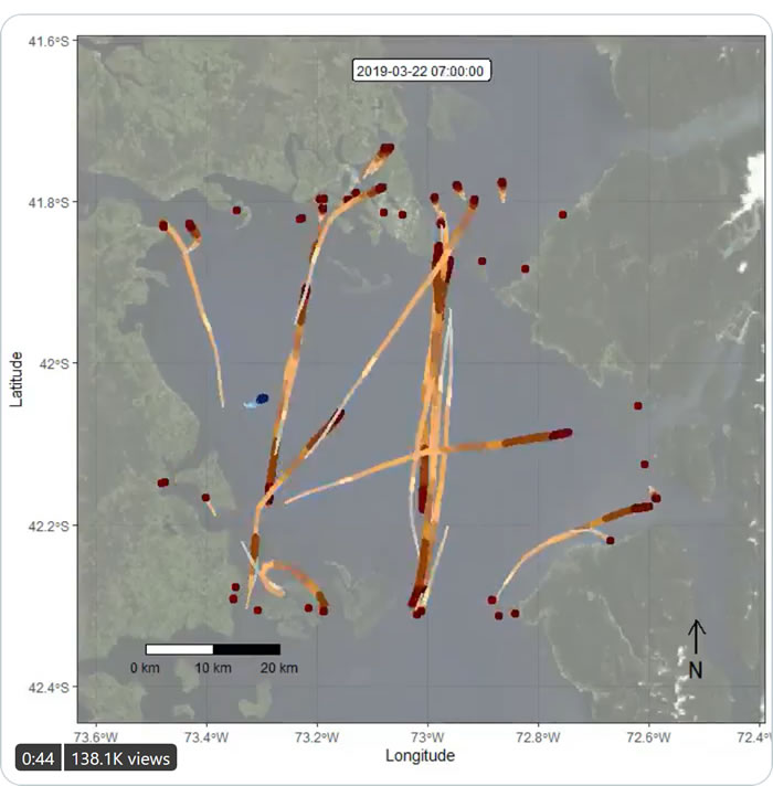看一只蓝鲸在科科瓦多湾挣扎着躲避拥挤船只的足迹