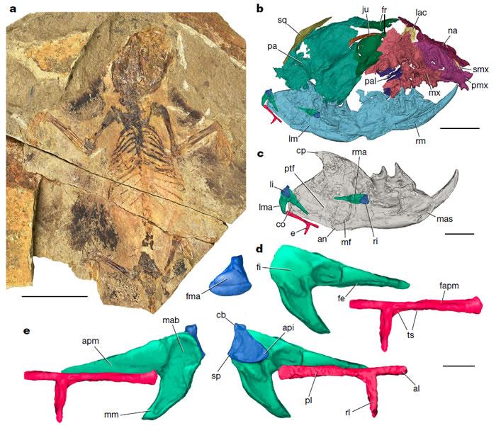 河北省青龙县中晚侏罗世燕辽生物群的贼兽类化石破解哺乳动物听觉演化谜题