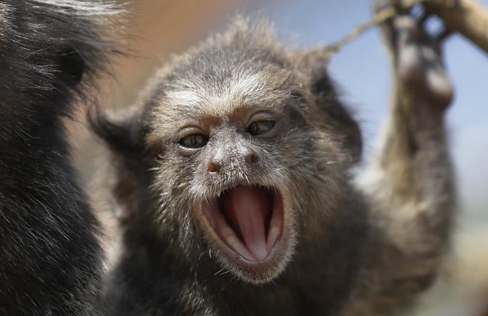 印度野猴闯民宅偷走8天大双胞胎女婴丢进河中