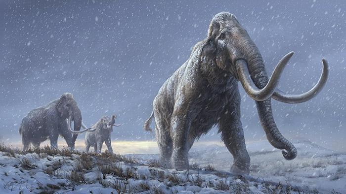 《自然》杂志:从超过100万年的猛犸象标本中检索到DNA