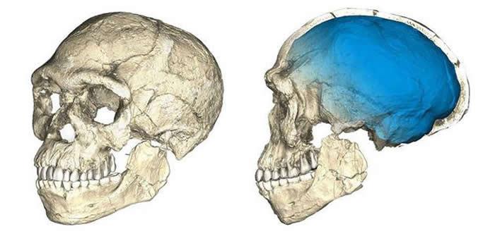 在Jebel Irhoud发现的、已知最早的智人化石的还原图。