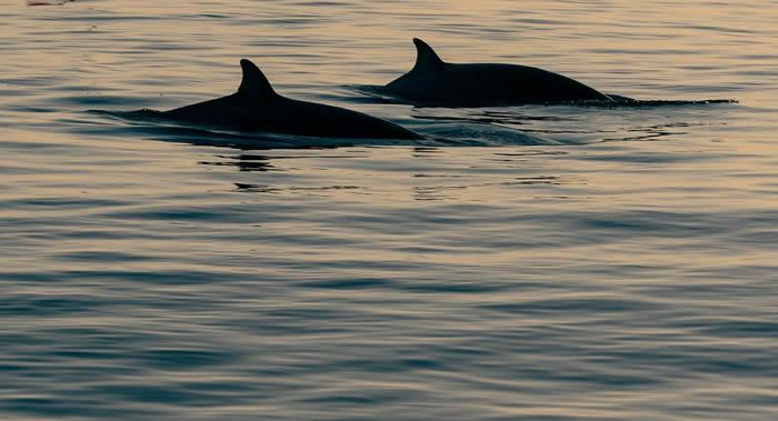 2月19日鲸鱼保护日:2020年全球约2000头灰鲸因不明原因死亡