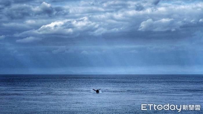 罕见大翅鲸(座头鲸)在台湾兰屿椰油滩头海域现踪