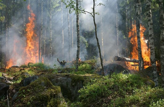 气候变迁:全球野火地域性正在改变 蔓延规模扩大