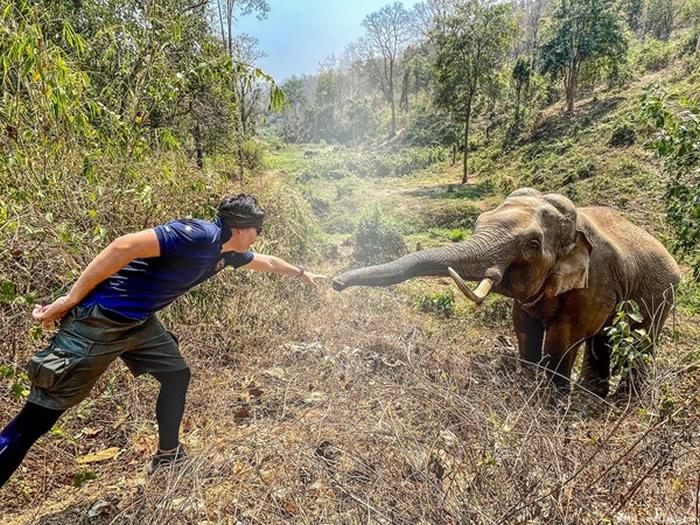 """泰国濒死大象获救12年后竟""""认出恩人"""" 伸长鼻与兽医Pattarapol Maneeon感动重逢"""