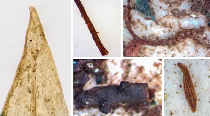 格陵兰岛冰盖深处发现植物化石