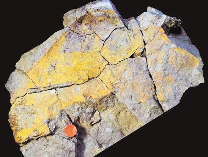 """""""洪山鱼""""化石。(通讯员 王紫璇 摄)"""