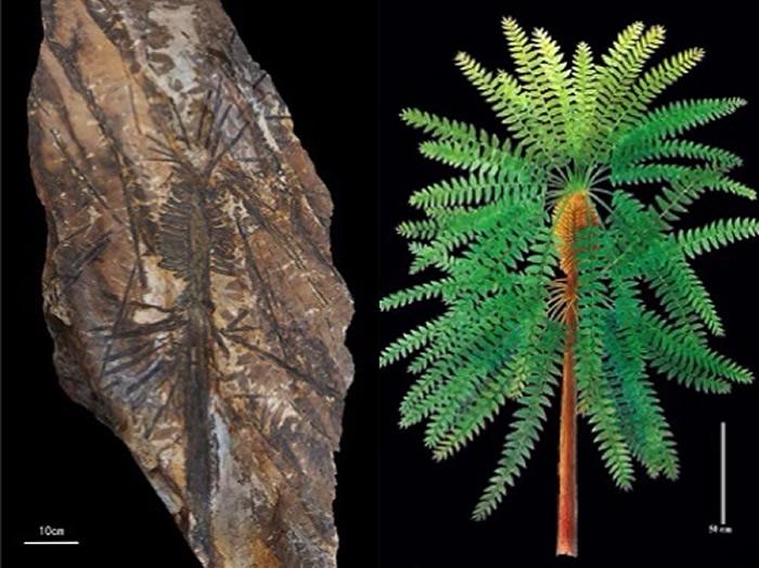 """科技日报:在找到这块化石前,这一植物已""""漂泊""""百年"""