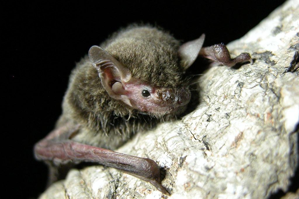 """""""病毒猎人""""入菲律宾深山取样蝙蝠 借此避免COVID-19这类大规模流行病再次发生"""