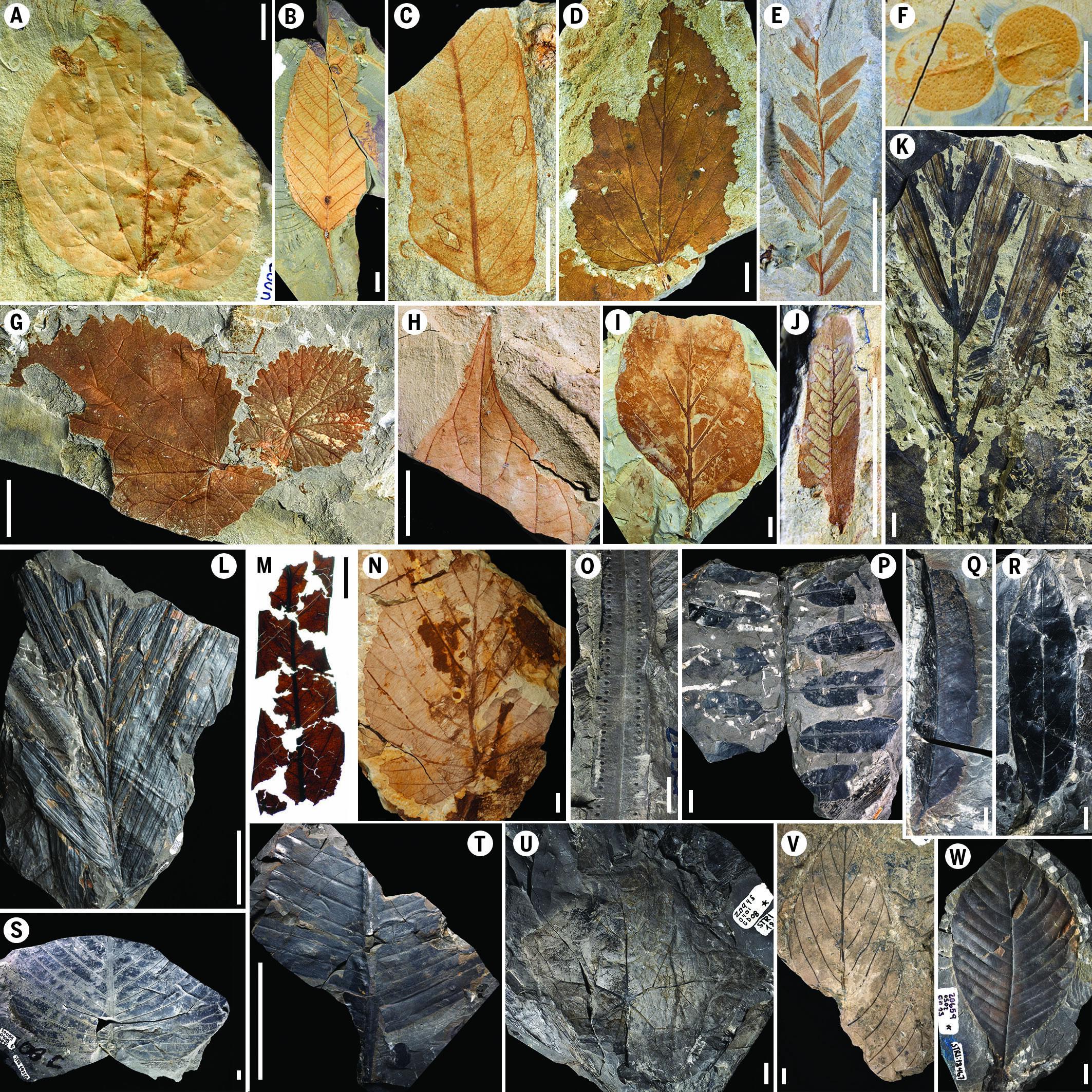 现代热带雨林的起源可追溯到白垩纪末期的小行星撞击