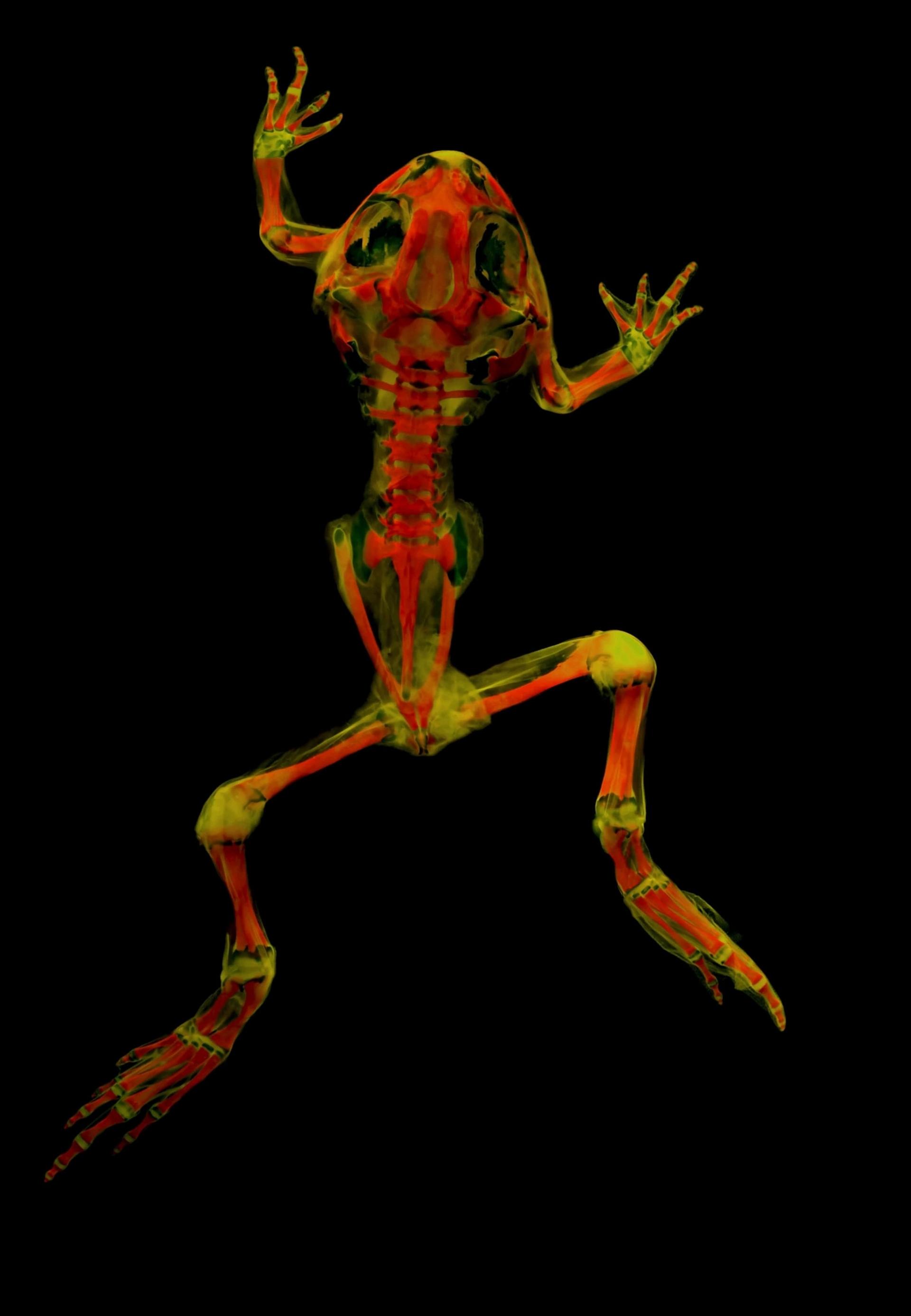 平原锄足蟾(plains spadefoot toad)分布在加拿大到墨西哥的美洲中西部,开发这种摄影技术的研究人员已经开始透过不同的波长与滤镜进行实验,看看这