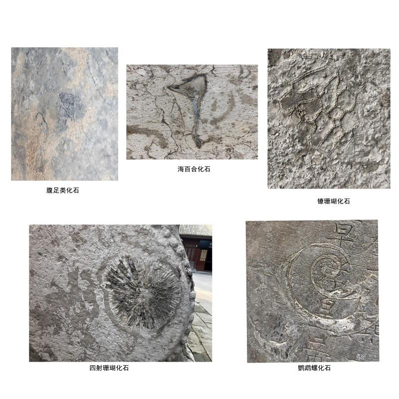 西安碑林博物馆碑林藏石中的古生物化石