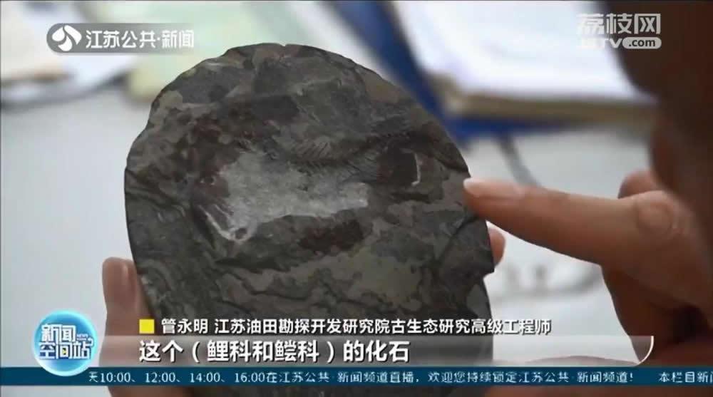 江苏油田研究人员在岩心样本中发现6000万年前鲤科和鲿科鱼类化石