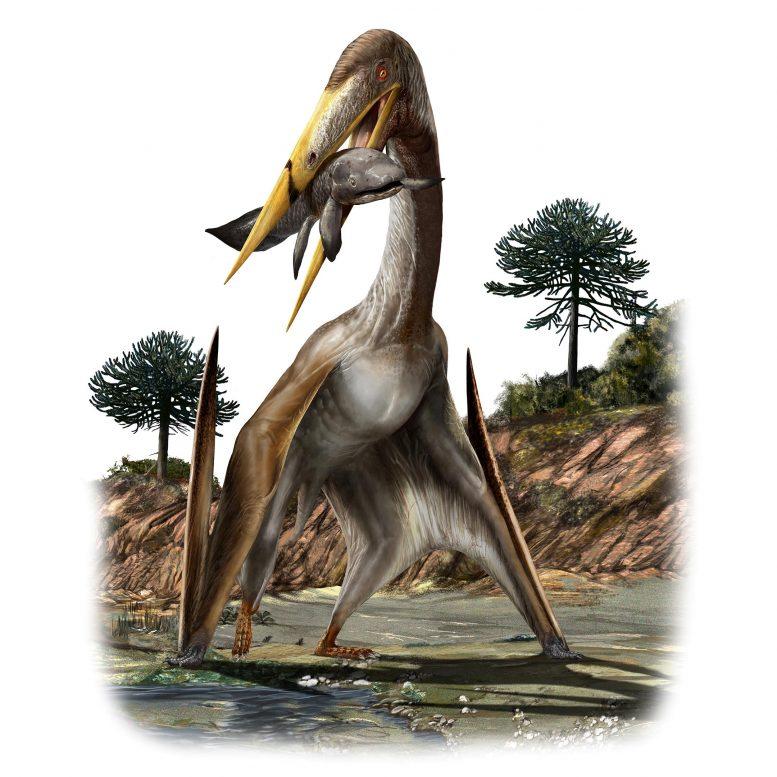 翼龙比长颈鹿还长的脖子如何得到支撑?