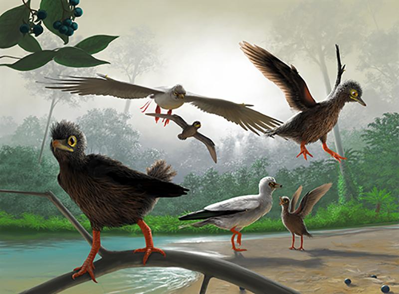 古喙鸟的复原图(Frederik Spindler 绘制)