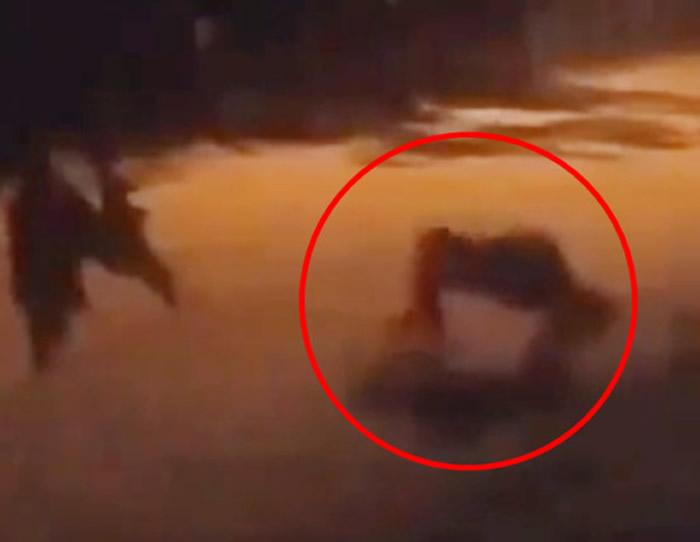 中美洲国家哥斯达黎加民居监控视频拍到神秘4腿怪在街上诡异爬行 附近狗狗狂吠