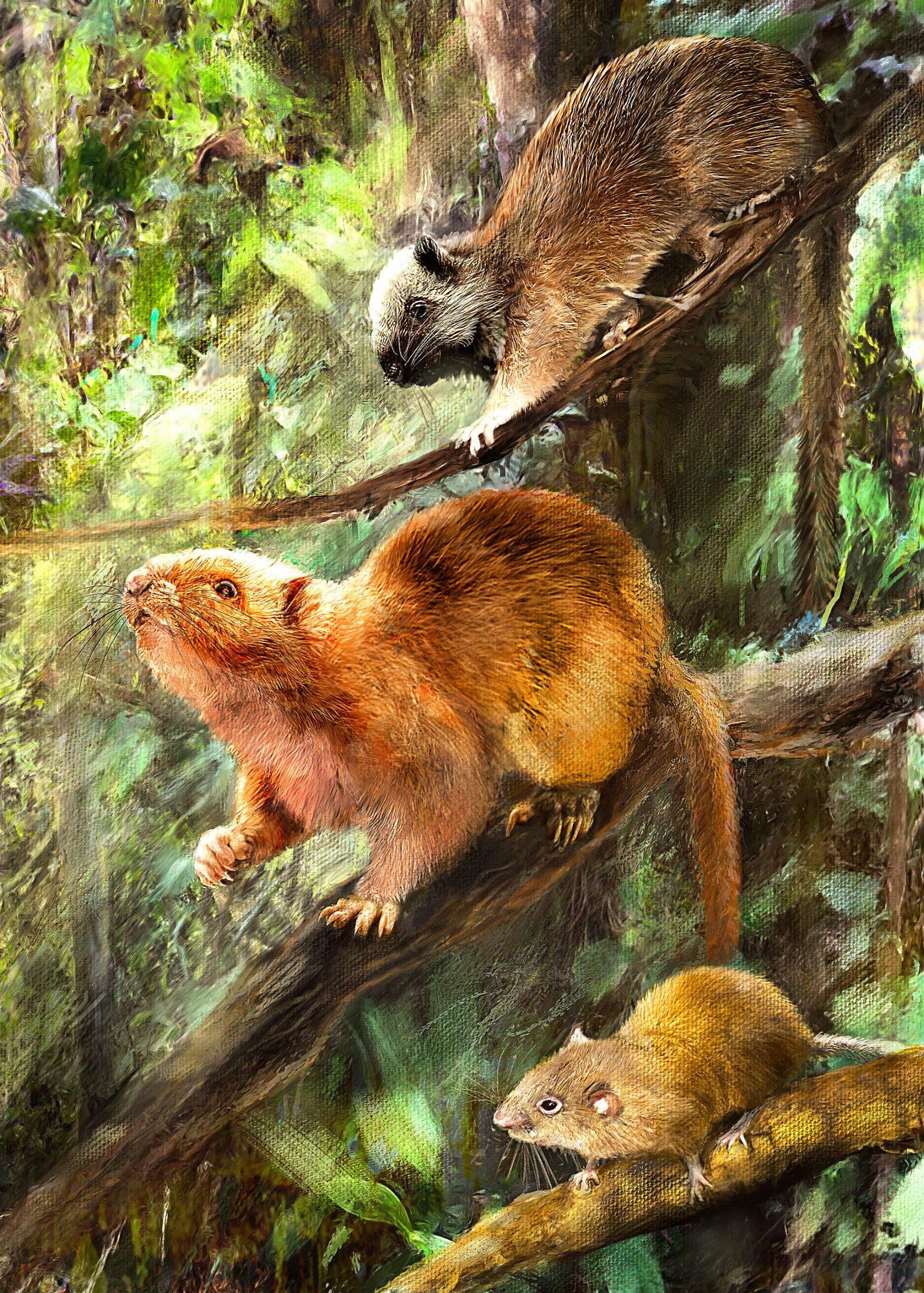 三种新云鼠化石物种可能样子的复原图