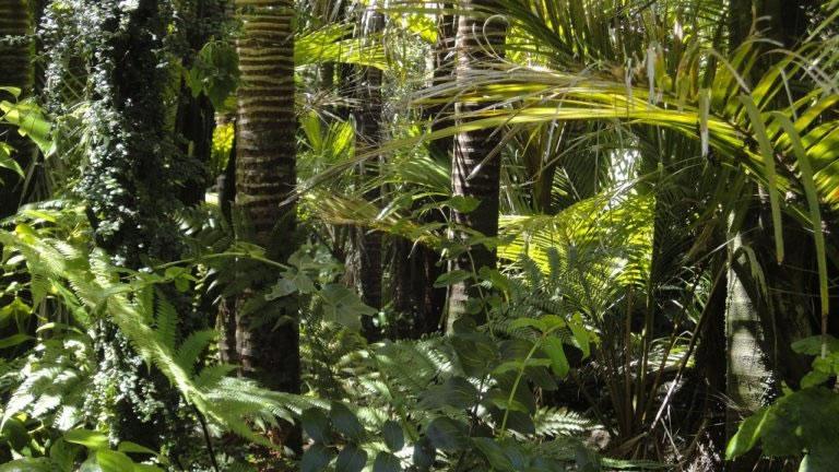 花粉化石记录表明亚马逊地区的人口减少和由此