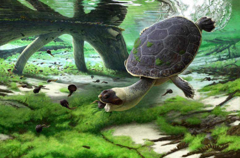 马达加斯加发现白垩纪晚期的海龟新物种化石——Sahonachelys mailakavava
