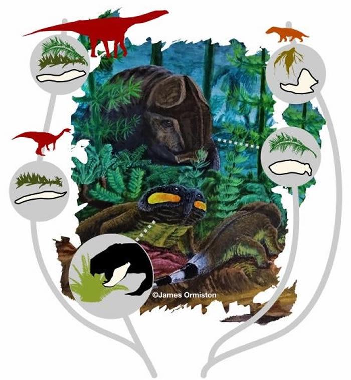 远古食草动物在大规模灭绝事件后发展出强大的颚部来消化更坚硬的植物