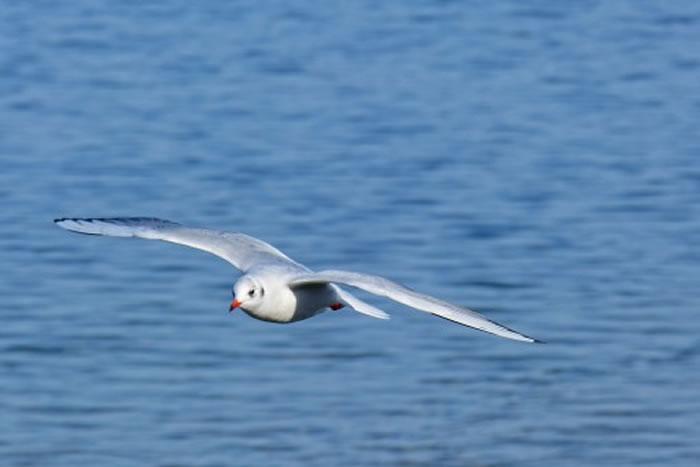 在北半球海洋表面觅鱼为食的鸟类要比其在南半球的同类承受更大的繁殖生产压力