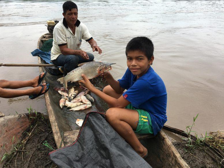 亚马逊野生鱼类生物多样性的下降或使人们面临营养短缺威胁