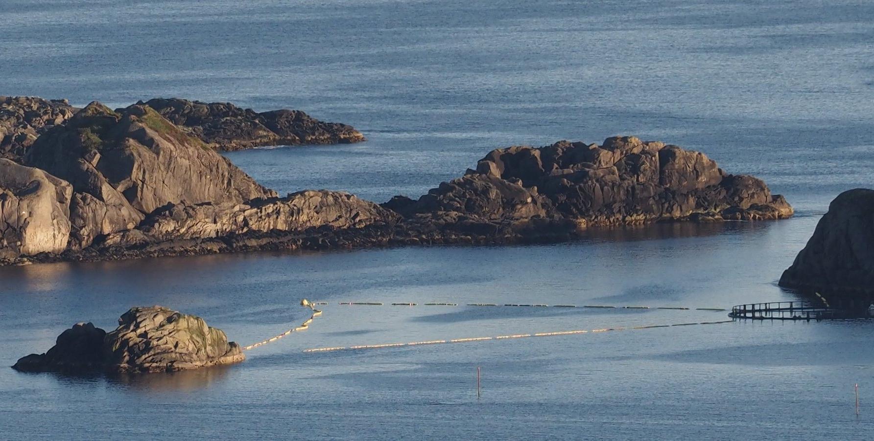 挪威政府计划捕捉年幼小须鲸进行长达六小时的声音测试 50多位科学家同声谴责