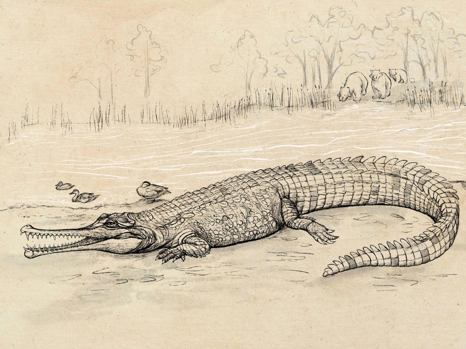 澳大利亚发现一种新的史前巨鳄Gunggamarandu maunala