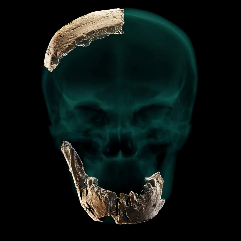 """以色列Nesher Ramla露天遗址中发现长相怪异的""""新人类""""化石"""