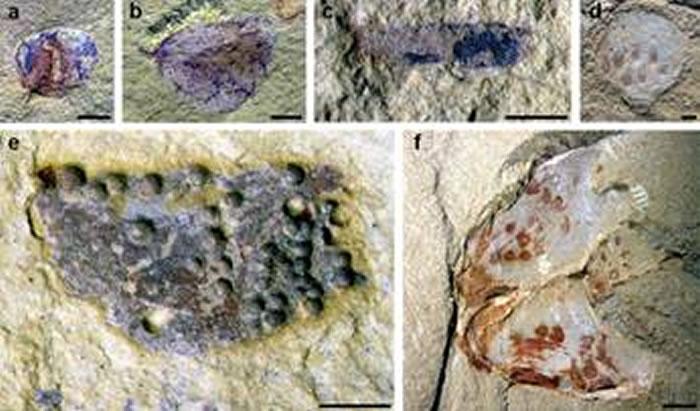 产自海晏新剖面的各类动物卵化石