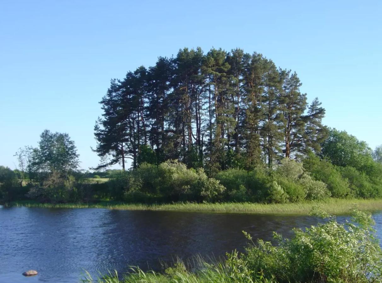 拉脱维亚5000年前狩猎采集者身上发现最早的鼠疫杆菌菌株