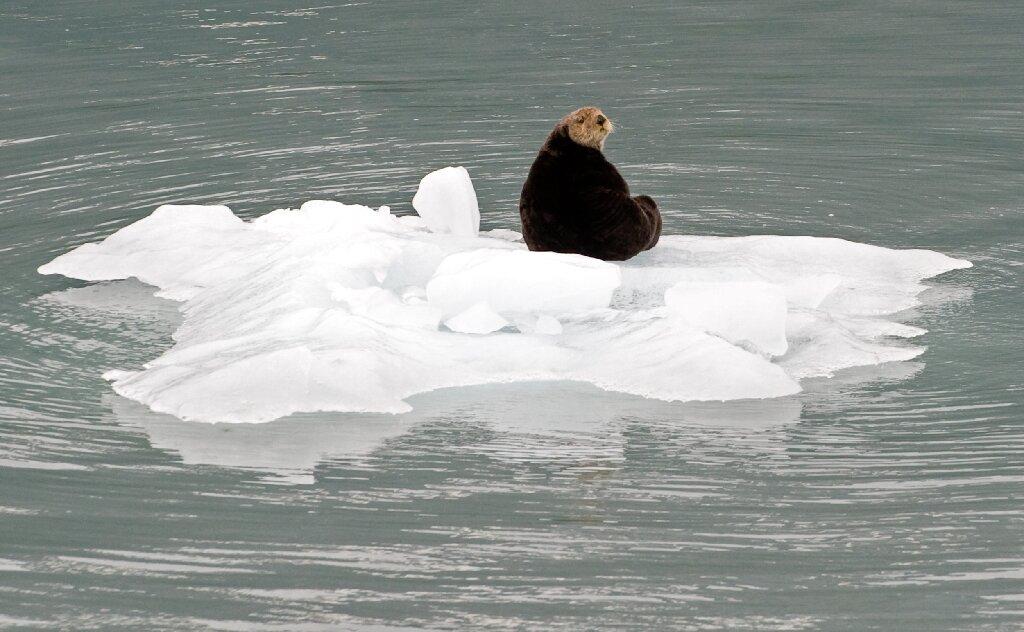 海洋中最小的哺乳动物——海獭可通过骨骼肌的生热作用而存活于寒冷海洋