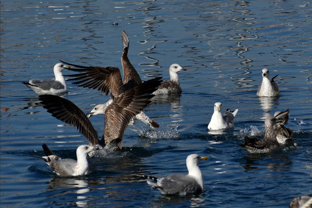 为了能在空中停留更长时间 海鸟进化出深色翅膀