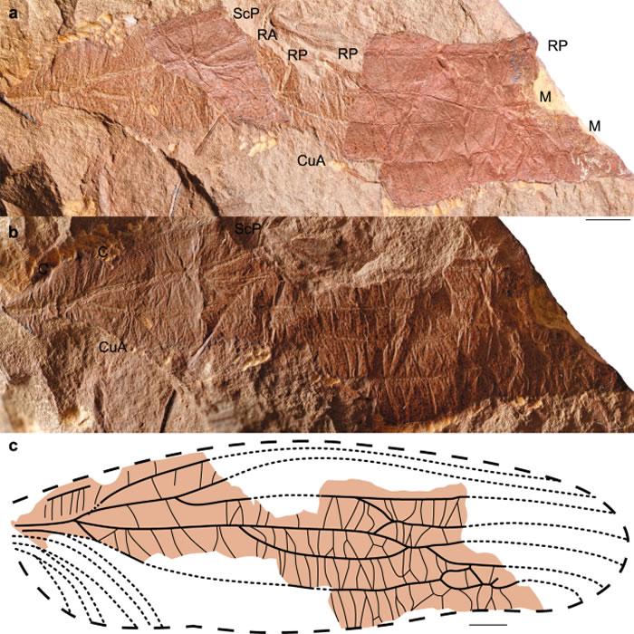 3.1亿年前昆虫或已开始用翅膀传播信息